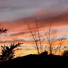 Sunset in my garden, Apple Valley, CA, USA by Shulie1