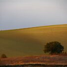 A poor lonesome tree   11 by Ben Bugarach