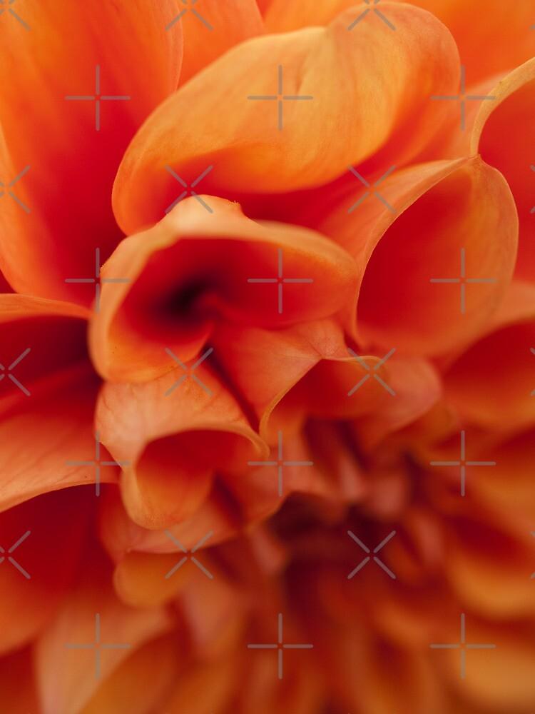 Orange Dahlia by Shannon Workman