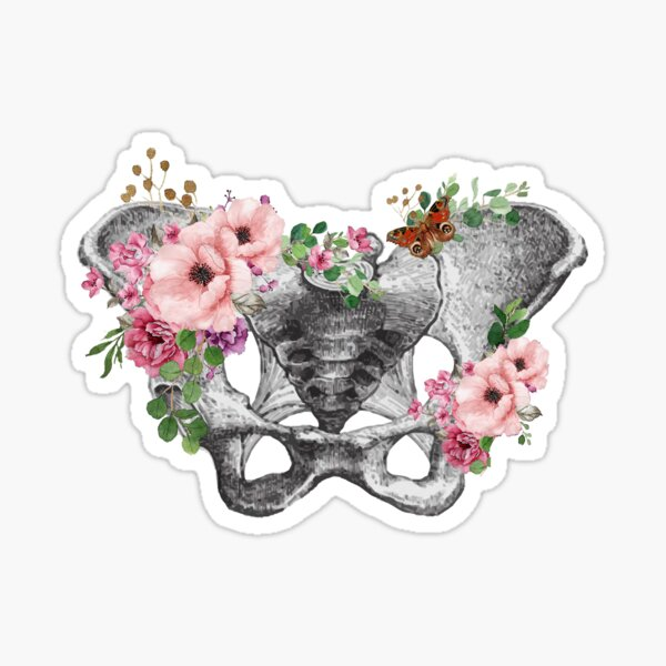 Feminism, anatomy, anatomical art, female bones of the pelvis Sticker