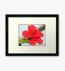 Red Flower Glory Framed Print