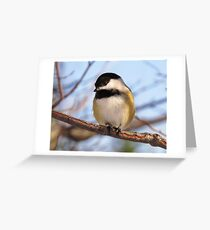 Chickadee picture Greeting Card