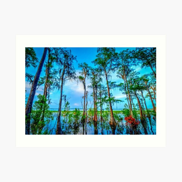 Palm Trees - Lake Russel, Florida  Art Print