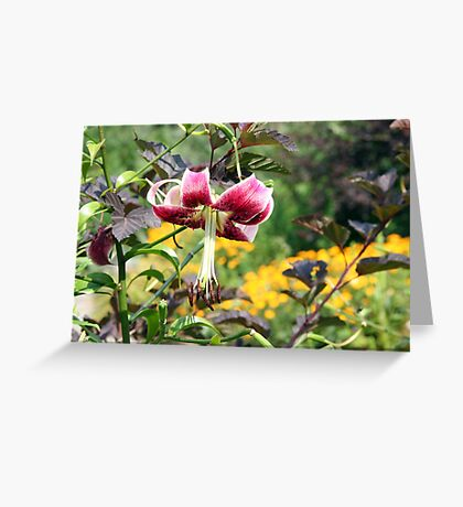 Hi Lily, hi lily, hi lo Greeting Card