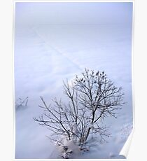 Chestnuts in winter Poster