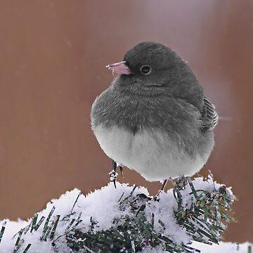 Dark Eyed Junco On Snowy Branch by cherylorraine