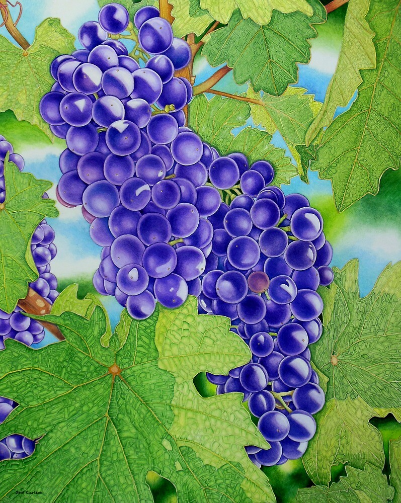 Vineyard by joeyartist
