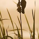 Red-winged Blackbird Silhouette by Tracy Riddell