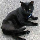 Shadow - Dark Feline von BlueMoonRose