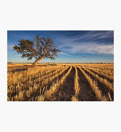Gold Trail Photographic Print
