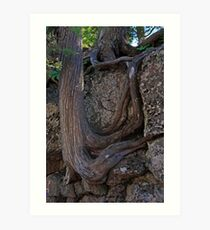 Intertwined Roots Art Print