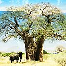 finding an old friend_elephant in the wild by Vin  Zzep