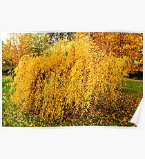 Autumn Weeping Poster