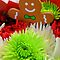 CHRISTMAS or HOLIDAY FLOWER ARRANGEMENTS
