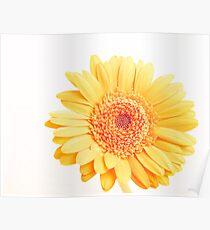 Landscape Flower Poster