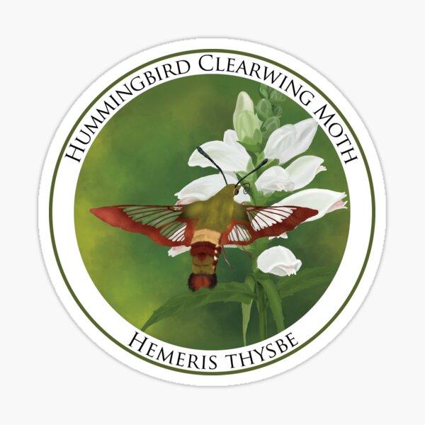 Hummingbird Clearwing Moth Badge Sticker