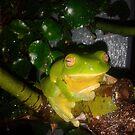 """ Kermit "" by ozjules8"