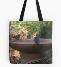 Bath time for Silvereyes (Zosterops lateralis) - Normanville, South Australia Tote Bag