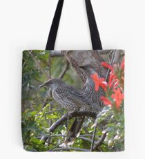 Little Wattlebird (Anthochaera (Anellobia) chrysoptera) - Normanville, South Australia Tote Bag