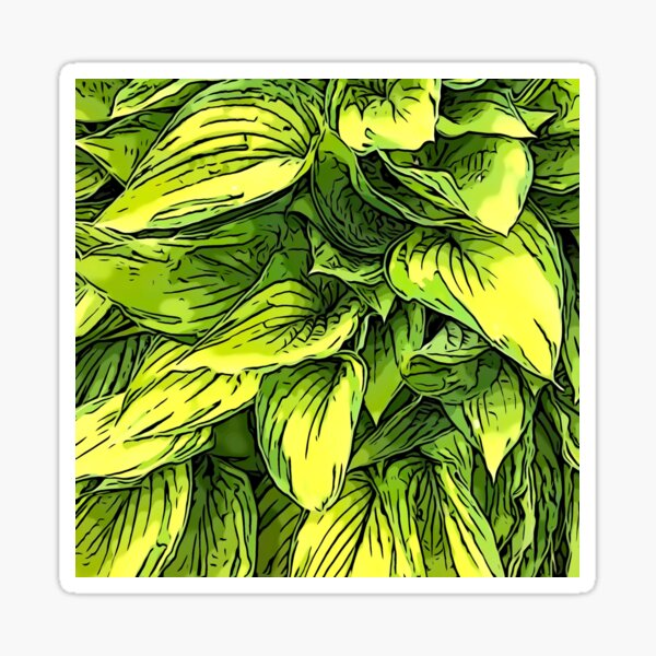 Green & Yellow Hosta Plant Sticker