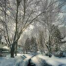Brookline after Blizzard Nemo by LudaNayvelt