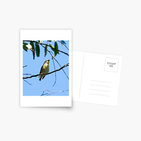 PARDALOTE ~ Striated Pardalote vb2tfUNR by David Irwin Postcard