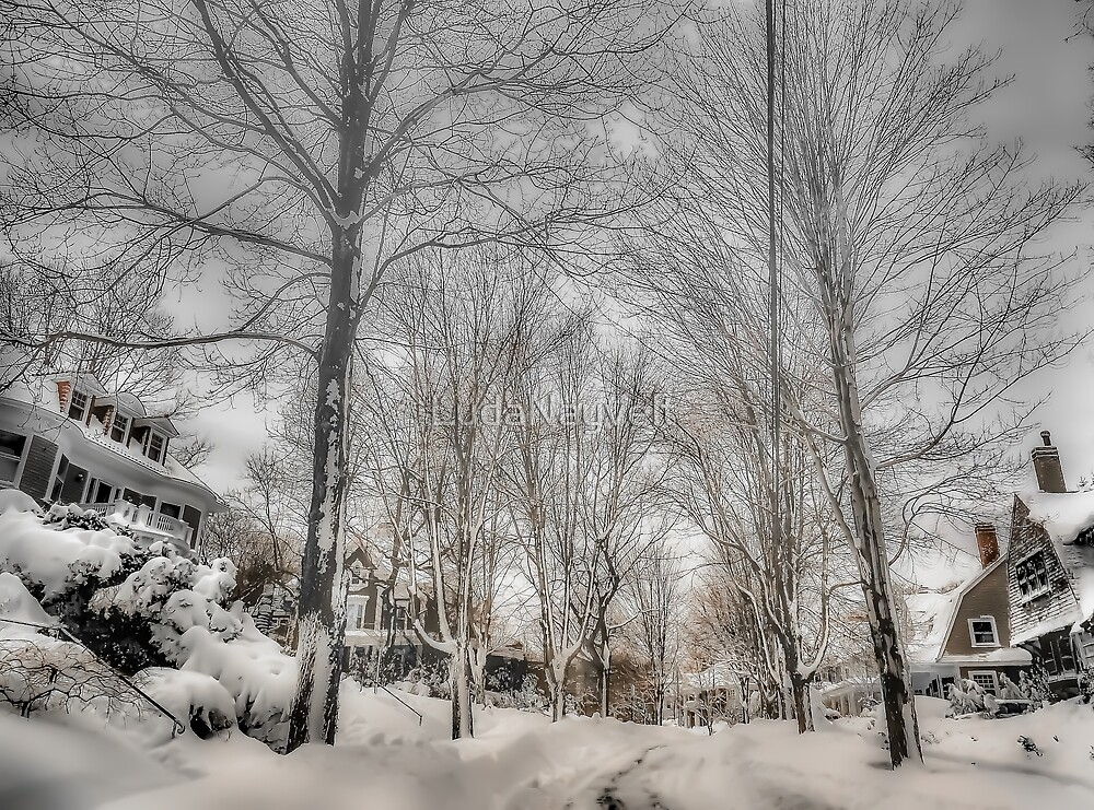 After Blizzard Nemo, Brookline, MA by LudaNayvelt