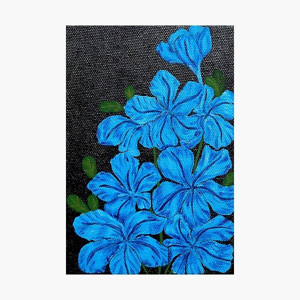 Blue Jasmine (Acrylic Art) Photographic Print