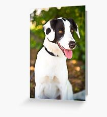 Spotty Rescue Dog *PROCEEDS TO CHARITY* Greeting Card