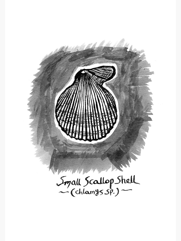 Small Scallop Shell by hoxtonboy