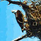 Osprey St George Island Florida Abstract Impressionism by pjwuebker
