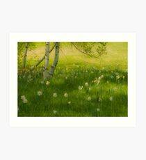 Birch Tree and Daffodils Art Print