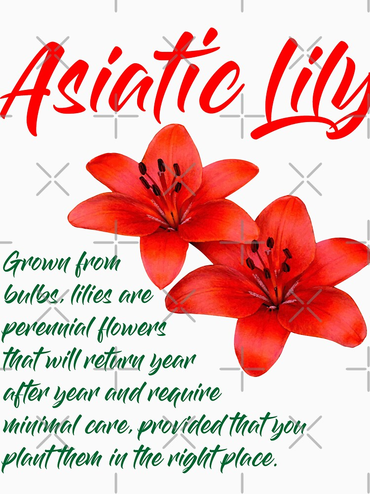 Asiatic Lily T-Shirt Design by carlarmes