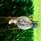 Hawaiian Nene Abstract Impressionism by pjwuebker