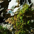 Mountain Goat and Baby Abstract Impressionism by pjwuebker