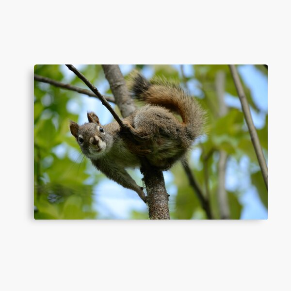 Squirrel In Greenery 2 Canvas Print
