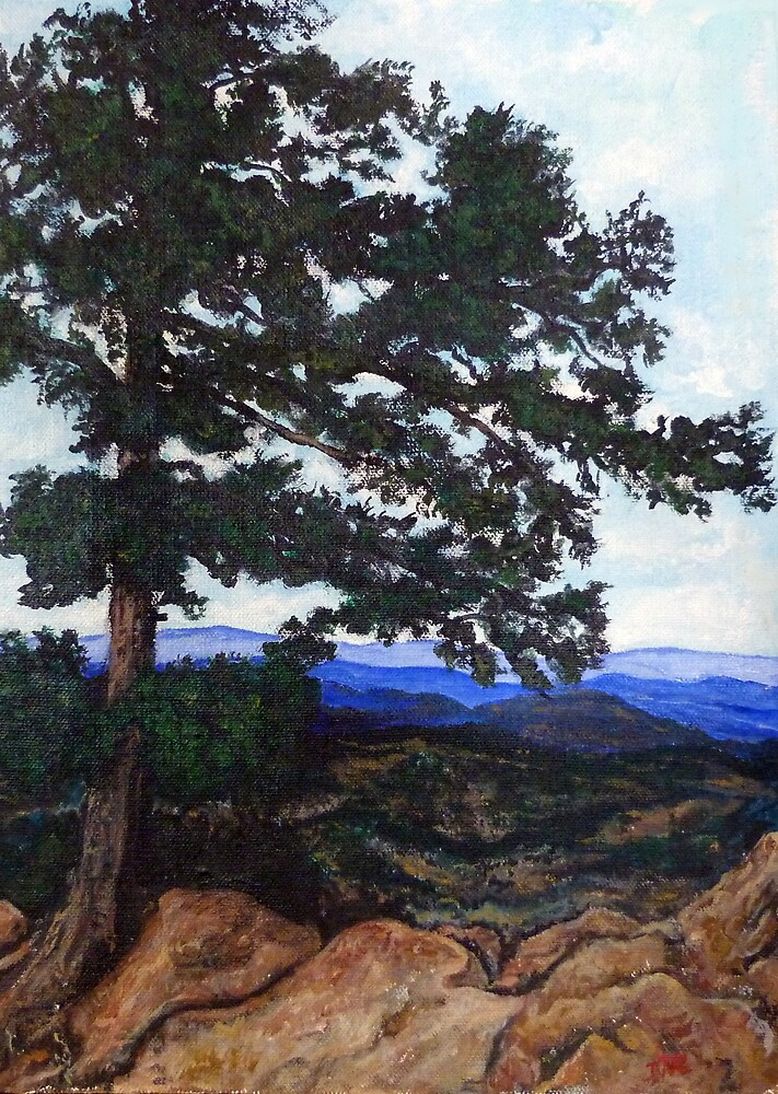 Flagstaff Mountain Tree by Tom Roderick