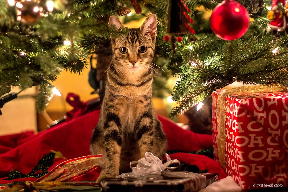 Cisco Loves Christmas by Mikell Herrick