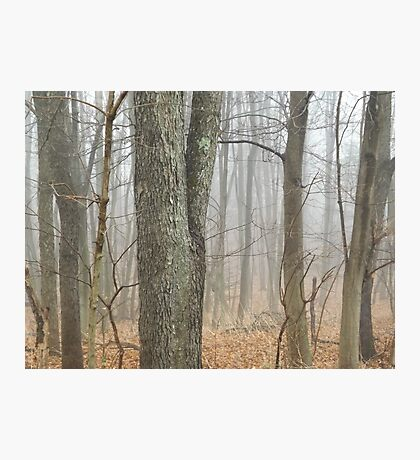 The Fog Photographic Print