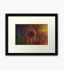 Seasonal. Framed Print