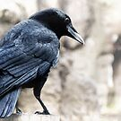 Raven by Heather Haderly