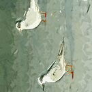 Forsters Tern on Beach Abstract Impressionism by pjwuebker