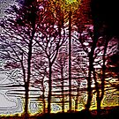 Sunset beyond the trees by George Hunter