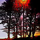 Sunset through the trees by George Hunter