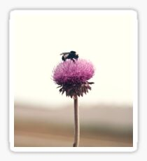 Bumble Bee and Thistle Sticker