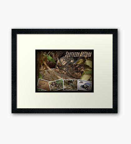 Southern AZ Critters Framed Print