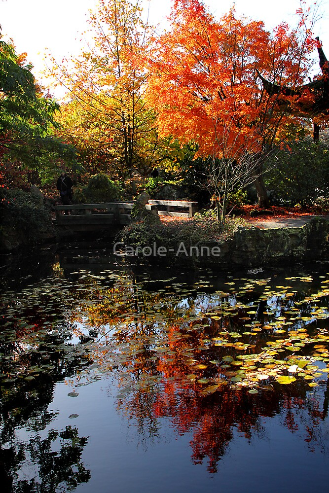 Chinese Garden in Autumn: Vancouver by Carole-Anne
