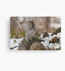 Grey Squirrel In The Snow Canvas Print