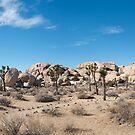 Panorama of Joshua Tree by philw