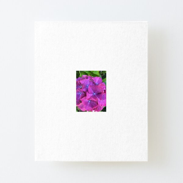 Pink and Purple Hydrangea Canvas Mounted Print